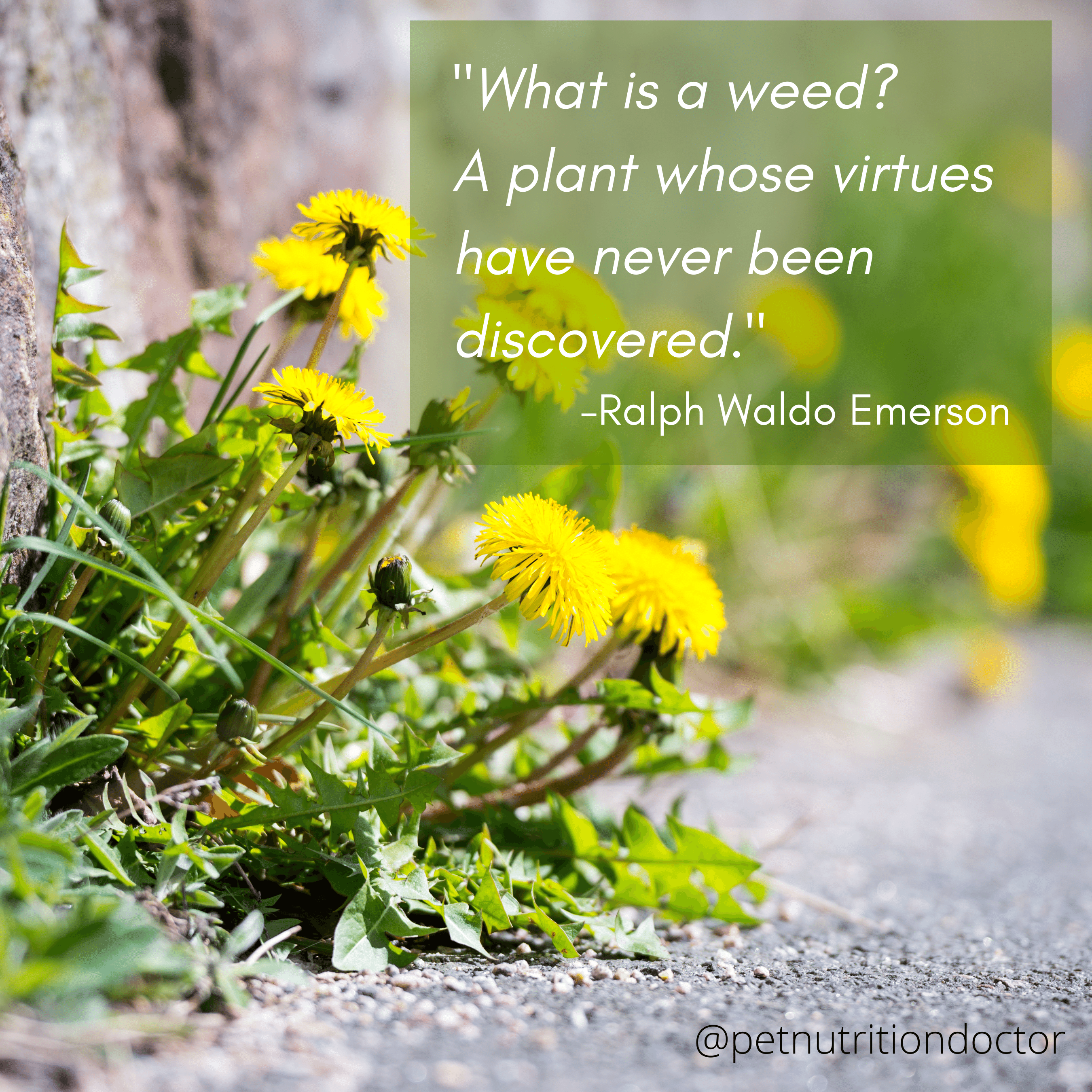 What is a weed?